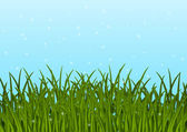Green grass on blue sky background — Stock Vector