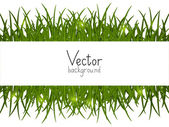 Green grass background with place for text — Stock Vector