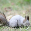 Squirrel eating in the forest — Vídeo de stock