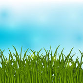 Green grass on blue background — Stock Vector