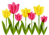 Pink and yellow tulips — Stock Vector