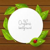 Cartão de papel com folhas verdes — Vetor de Stock