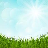 Hierba verde sobre fondo soleado — Vector de stock