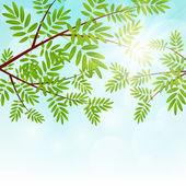Rowan tree branches — Cтоковый вектор
