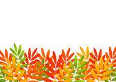 Frontera de hojas de otoño en blanco — Vector de stock