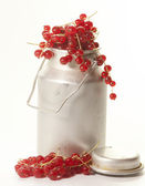 Currants — Stock Photo