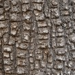 Aligator Juniper Bark — Stock Photo