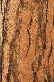 Ponderosa Pine Bark Vertical — Stock Photo