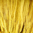 Stalks of Golden Wheat — Stock Photo