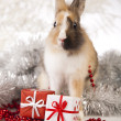 Rabbit, bunny Christmas — Foto Stock