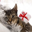 Cat christmas — Stock Photo