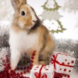 Bunny with Christmas — Stock Photo