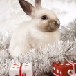 Christmas bunny — Stock Photo #12749315
