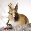 Christmas bunny — Stock Photo #12749437
