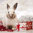 Rabbit, bunny Christmas — Stock Photo