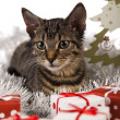 Christmas cat — Stock Photo #12749525
