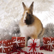 Christmas bunny — Stock Photo