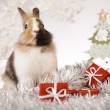 Christmas bunny — Stock Photo #12749841
