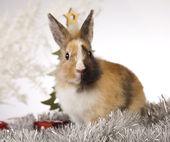 Conejo con la navidad — Foto de Stock