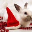 Christmas bunny — Stock Photo #12750111