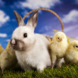 Chick in bunny — Stock Photo #12754956