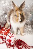 圣诞兔子 — 图库照片