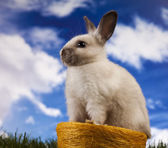Spring baby bunny and green grass — Stock Photo