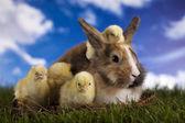 Kočka v zajíček — Stock fotografie