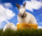 Zajíček v trávě — Stock fotografie
