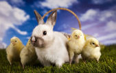 Chick in bunny — Stock Photo