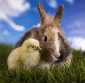 ウサギやひよこと緑の芝生 — ストック写真