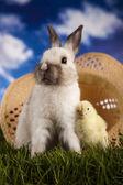Tavşan kız — Stok fotoğraf