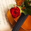 Red rose, violin — Stock Photo
