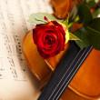 Red rose, violin — Stock Photo