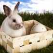 Rabbit in grass — Stock Photo #18862675