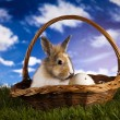 Rabbit in grass — Stock Photo #18862711
