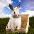 Stock Photo: Baby bunny