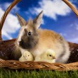 Happy Easter, Chick in bunny — Stock Photo #18863579