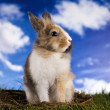 Rabbit in grass — Stock Photo #18863585