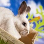 Baby bunny — Stock Photo