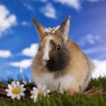 兔宝宝 — 图库照片