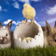 Bunny and chick and green grass — Stock Photo