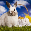 Easter animal, bunny in grass — Stockfoto