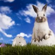 Easter Bunny — Stock Photo #18883863