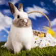 Easter Bunny — Stock Photo #18883937