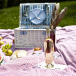 Wine and picnic basket on the grass — ストック写真