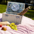 Picnic on the grass — Foto de Stock