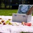 Wine and picnic basket on the grass — Stock Photo #28439691