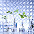 Chemistry equipment, plants laboratory glassware — Stock Photo #28442227