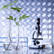Chemistry equipment, plants laboratory glassware — Stock Photo #28442265